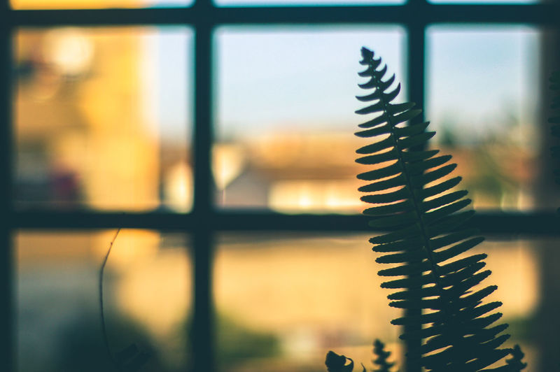 Plant Close-up Day Fern Focus On Foreground Indoors  No People Sky Window
