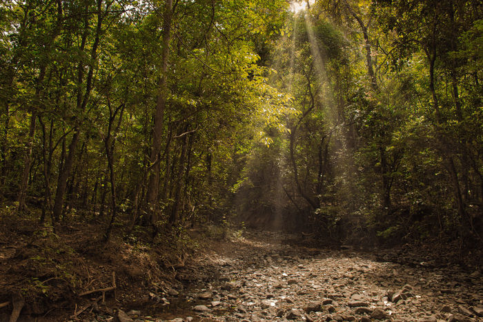 Guanacaste  Nosara Adventure Day Forest Medow Mystery Forest Nature No People Outdoors Plant Sunbeam Tree