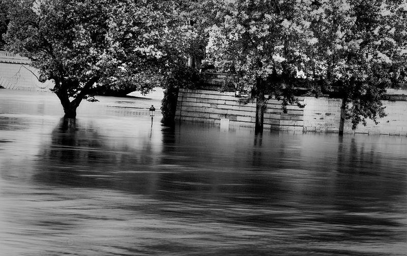 Ile Saint Louis Long Exposure Noir Et Blanc Paris Photography Quais De Seine Seine Tranquil Scene Tree Water