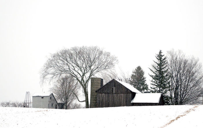 beautiful rustic barns stand out against a stark, snow covered landscape in Michigan USA Barns Beautiful Rustic Architecture Bare Tree Beauty In Nature Building Exterior Built Structure Cold Temperature Day Family Farm House Nature Outdoors Silo Sky Snow Snow Frosted Tree Weather Winter