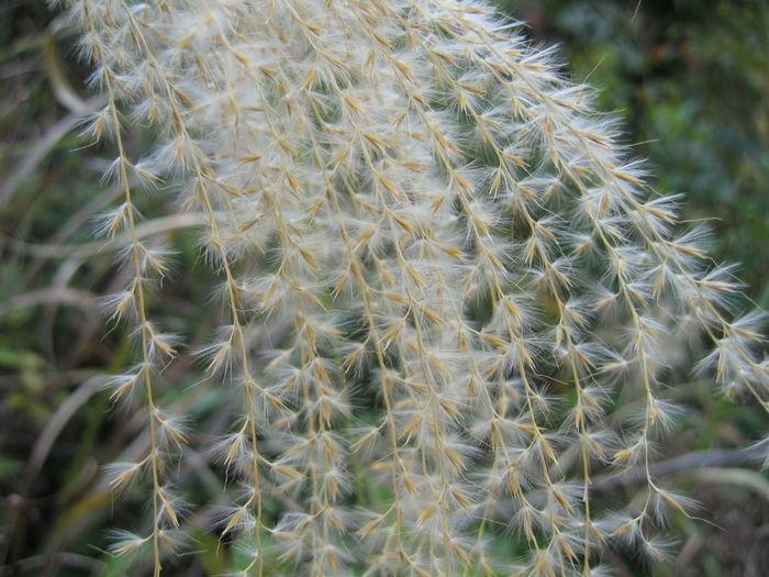 植物 微距