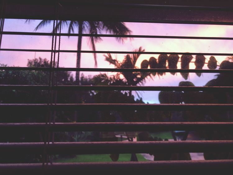Sunset on Kauai Love It Moments Of Life Enjoying The View Princeville Kauai Hawaii Summer Holiday Vacation Dreamy Dreaming Paradise Garden Palm Window View Window Silhouettes Sunsetphotographs Sunset Lovers Sunsetporn Sunsets Sunset Silhouettes Sunset_collection Sunset Low Angle View Day No People Indoors  Nature Sky