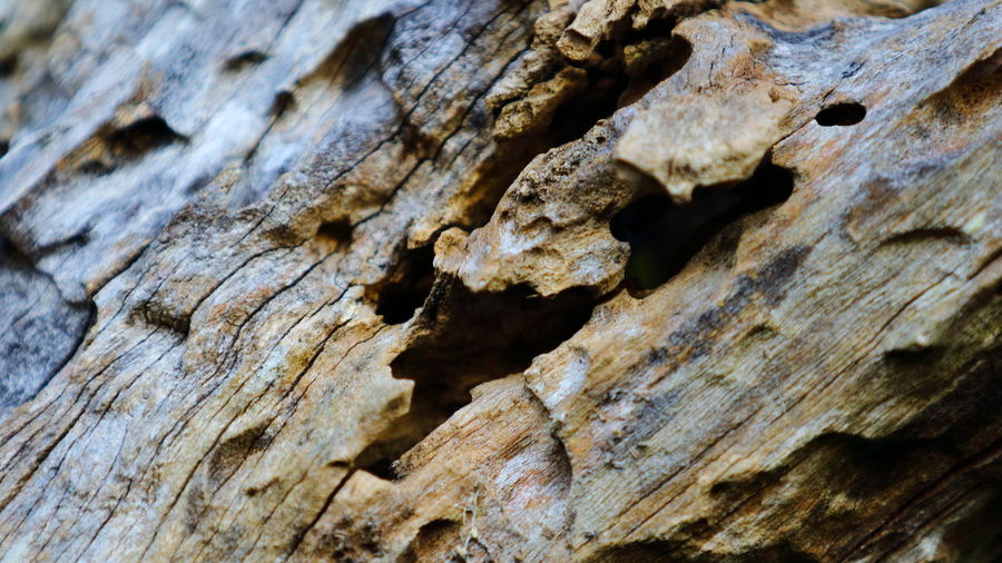 A close up capture, showing the burrowed holes within a now decaying tree branch. These holes formed by larval bugs eating through the wood fiber, in their life cycle process to becoming either a moth or some other flying insect later on. Abstract Photography Abstract Nature EyeEm EyeEm Nature Lover EyeEm Gallery Macro Photography Nature Photography Tadaa Community Abstract Close-up Decayed Beauty Decaying Eye4photography  Full Frame Light And Shadow Natural Decay Nature Naturelovers Pattern Rough Streamzoofamily Textured  Textured Surface Tree Trunk Wood - Material