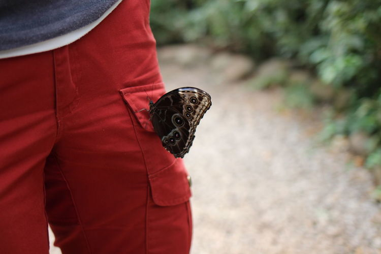 Close-Up Of Butterfly On Person Lap