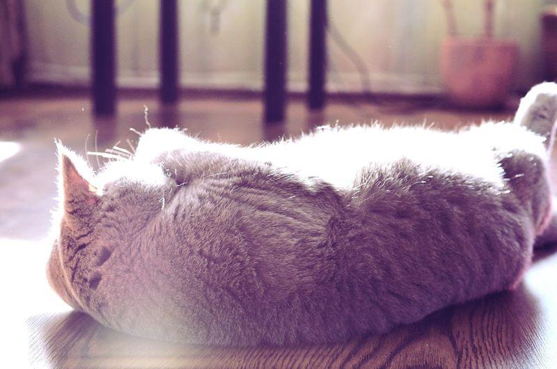 Cat Sweet Cat Lovers Light Cats Of EyeEm Cat Photography Cat♡ First Eyeem Photo