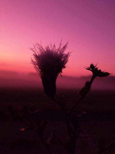 Tadaa Community Sun Rise Shilouette Godthåb