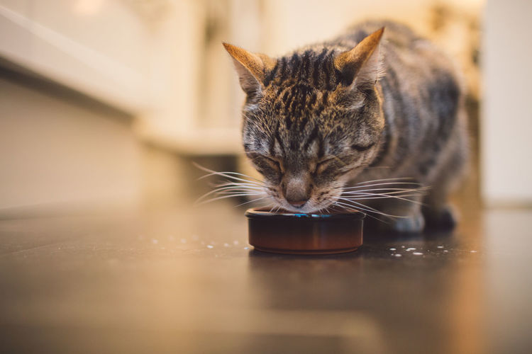 Close-up of cat drinking milk on floor at home