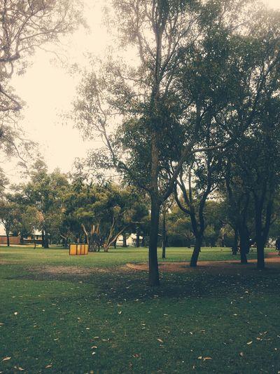 Park Nature Vscocam