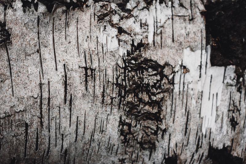 Full frame shot of trees against wall