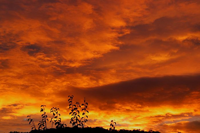 Tonight's sunset-spectacle Sunset Sky Cloud - Sky Orange Color Beauty In Nature Silhouette Nature Dramatic Sky Scenics - Nature Tranquil Scene Tranquility Idyllic Sunlight Romantic Sky