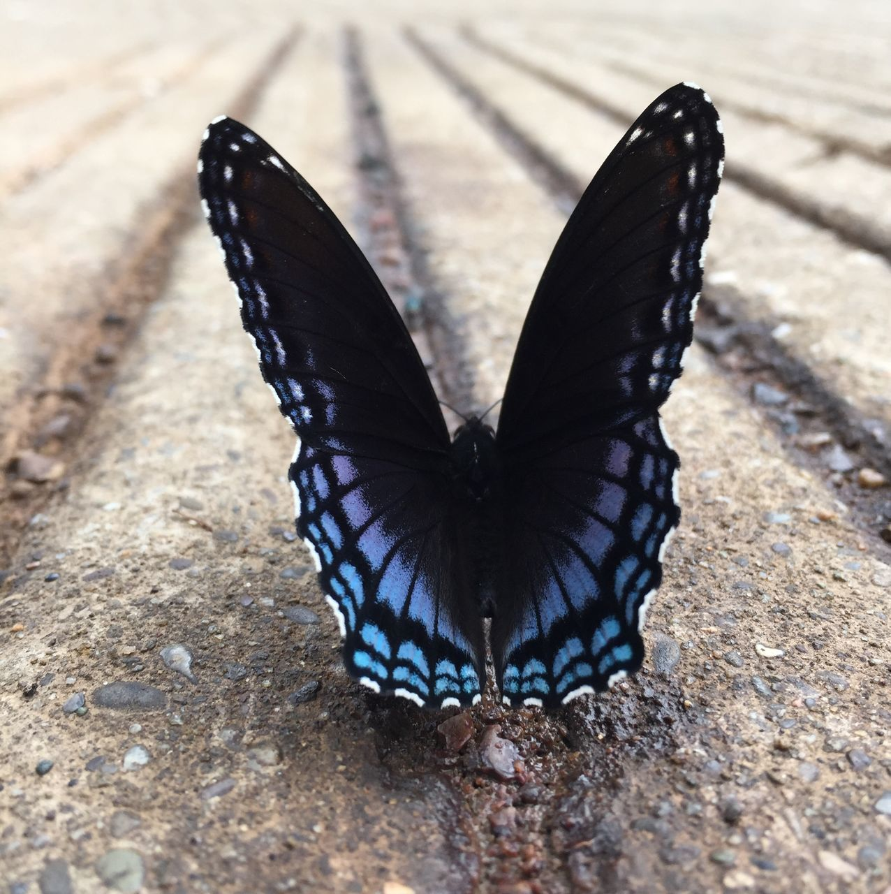 Close-Up Of Butterfly On Street