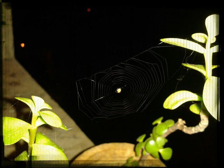 Una amiguita en mi planta ;)