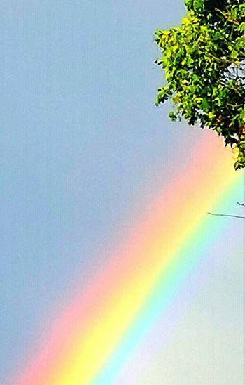 Rainbow Magical Brigde