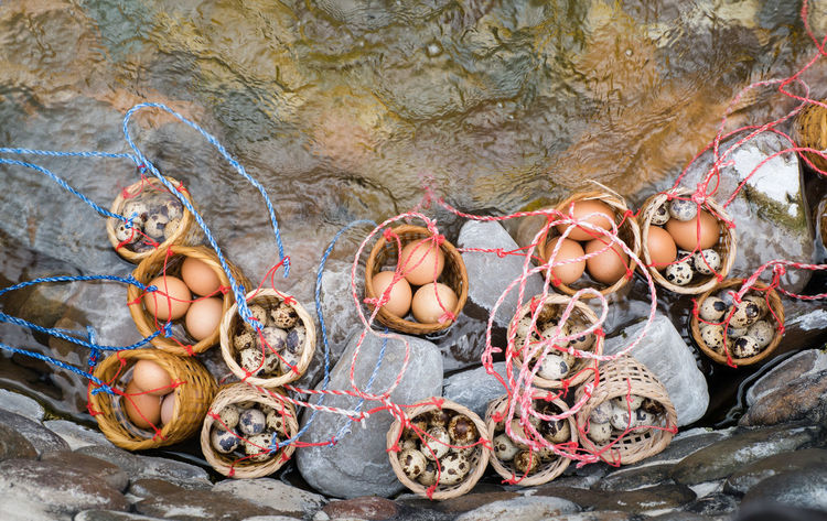 Animal Themes Bird Eggs Boiled Eggs Day Fishing Net Hot Spring Mammal Nature No People Outdoors