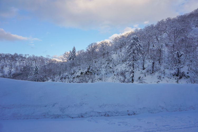 Beautiful Winter Landscape with Winter forest under the snow , powder snow on a road in, Hokkaido Japan Japan Hokkaido Travel Destinations Travel Happy Lifestyles Enjoying Life Copy Space White Background Snow Winter Cold Temperature Sky Scenics - Nature Cloud - Sky Beauty In Nature Tranquil Scene Tranquility No People Nature White Color Environment Tree Plant Day Landscape Mountain Covering Snowcapped Mountain Range Mountain Peak