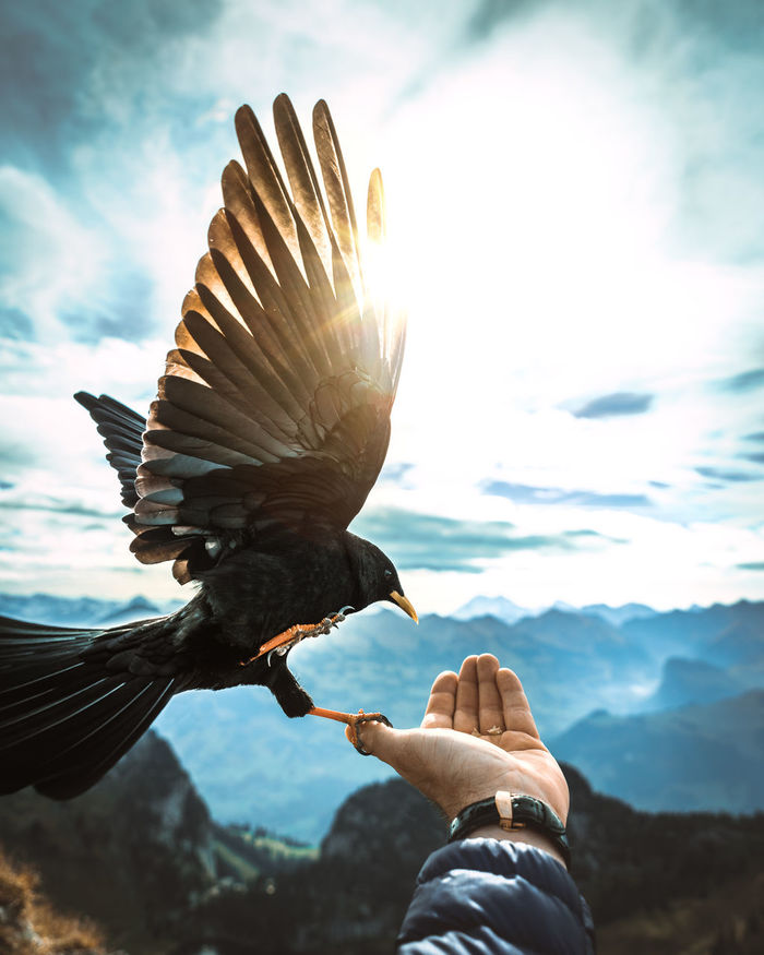 Close-up of bird perching on hand against mountain