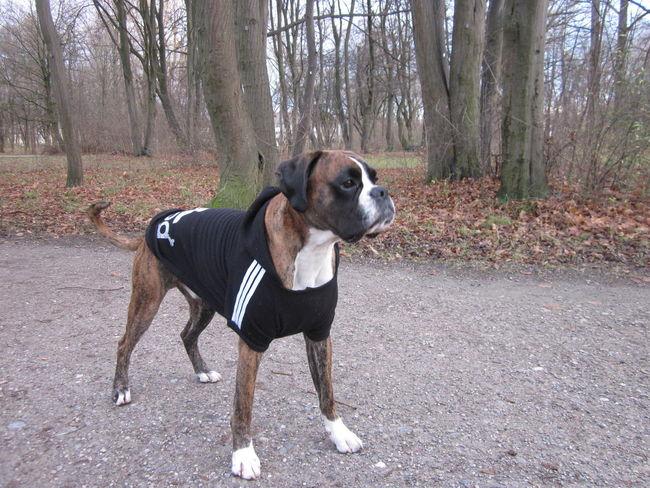 AdidasLover❤ Adidog Dog Dogslife Domestic Animals I Love My Dog