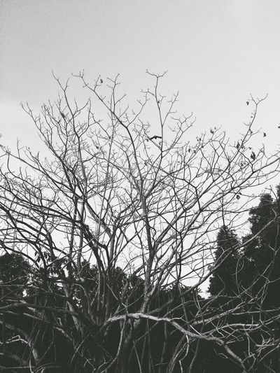 Black And White Blackandwhite Nature Tree IPhoneography VSCO Vscocam Silhouette Branches Branches And Sky Beauty In Nature Beauty Redefined Minimalism Landscape Eyemphotography The Week On EyeEm