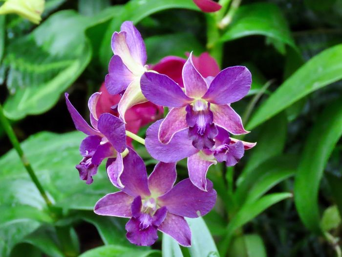 Flowering plants pink orchids close up green leaves focus on the foreground beauty in nature Flower Plant Growth Pink Color No People