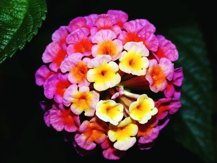 2002/04/27 17:50 Flower