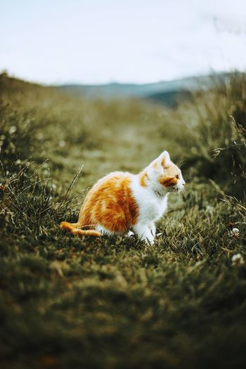 One Animal Animal Animal Wildlife Pets Animal Themes No People Nature Animals In The Wild Outdoors Day Mammal Domestic Animals Grass Close-up Summer The Week Of Eyeem Cat Photography Catlover Cat Watching Fresh On Market 2017