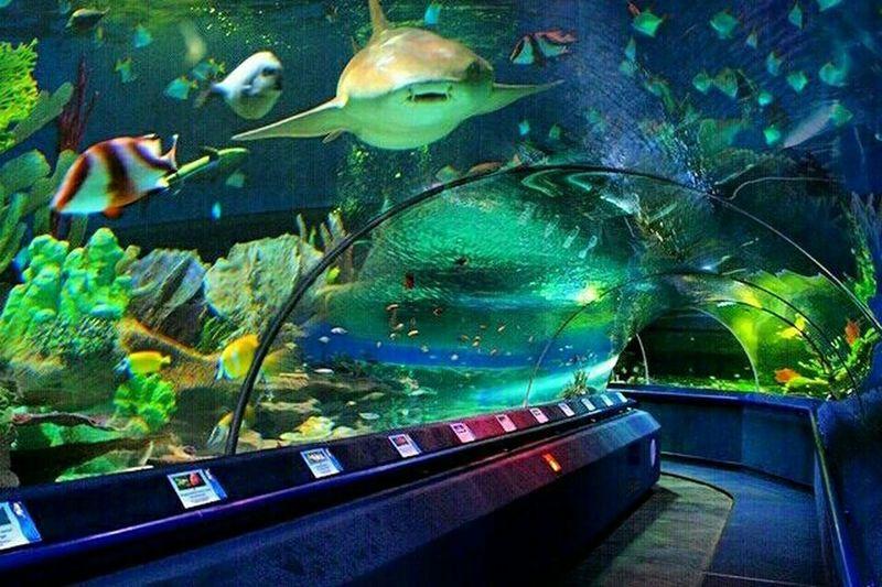 Океанариум в РИО рыбы океанариум EyeEm Gallery EyeEm Best Shots Popular Oceanarium Eye4photography  EyeEm Nature Lover Ocean Life