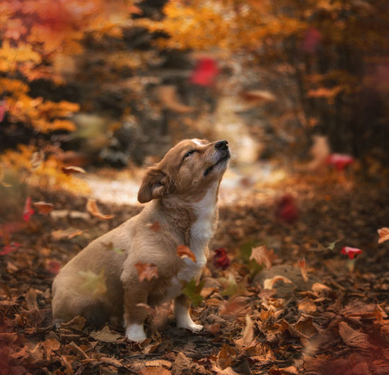 Close-up of dog on field during autumn