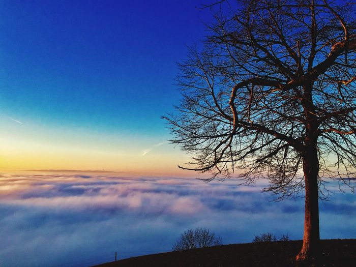 Sky Beauty In Nature Nature Blue Tranquility Bare Tree Scenics Tranquil Scene Sunset Tree Idyllic No People Silhouette Outdoors Day Fog Foggy Top Amazing View Winter