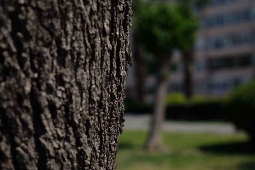 Tree Trunk Tree Textured  Nature Focus On Foreground Day Outdoors Bark Close-up No People Marking
