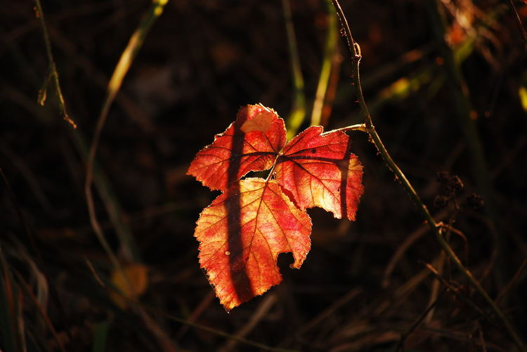 Close-Up Of Autumn Leaf