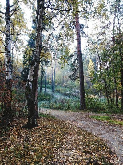 Осенний Лес Autumn