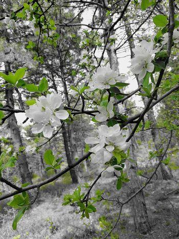 Tree Flower Branch Springtime Blossom Leaf Close-up Plant Sky