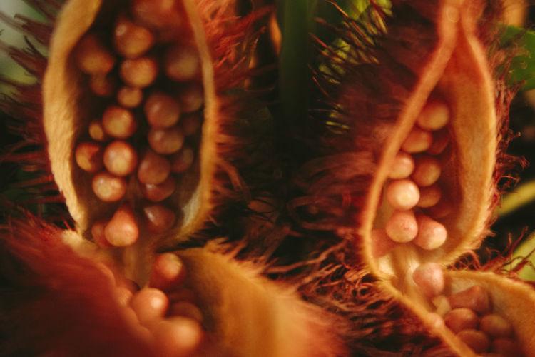 Detail shot of sunlight falling on plant