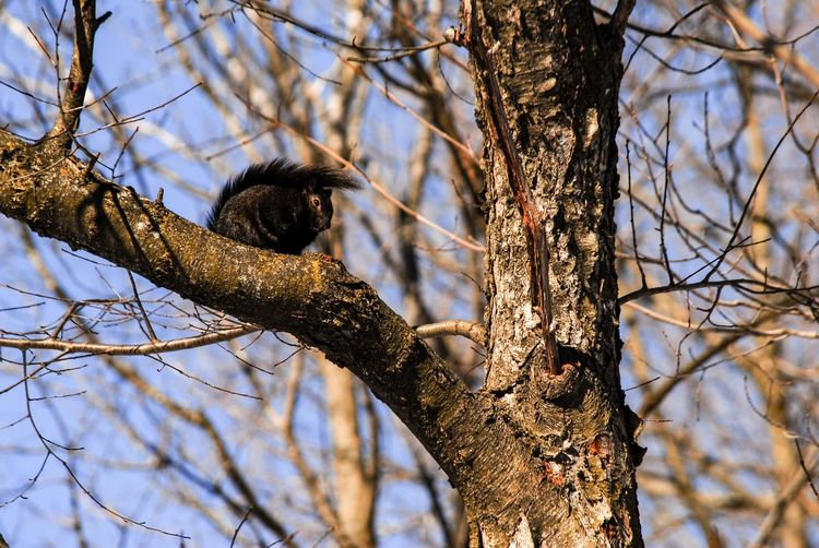 Squirrel views Tree Branch Plant Trunk Tree Trunk Vertebrate Animal Animals In The Wild Animal Themes Animal Wildlife Focus On Foreground Low Angle View One Animal Bare Tree Bird Nature Perching No People Day Outdoors Woodpecker Squirrel