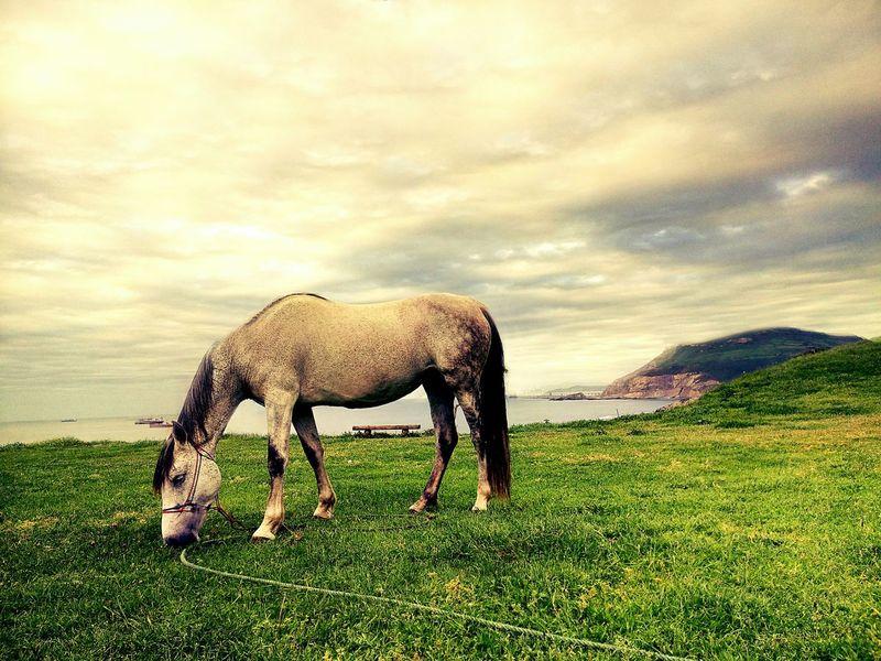 Easy life Horse Relaxing Sea Grass Eat Caballo Hierba Mar