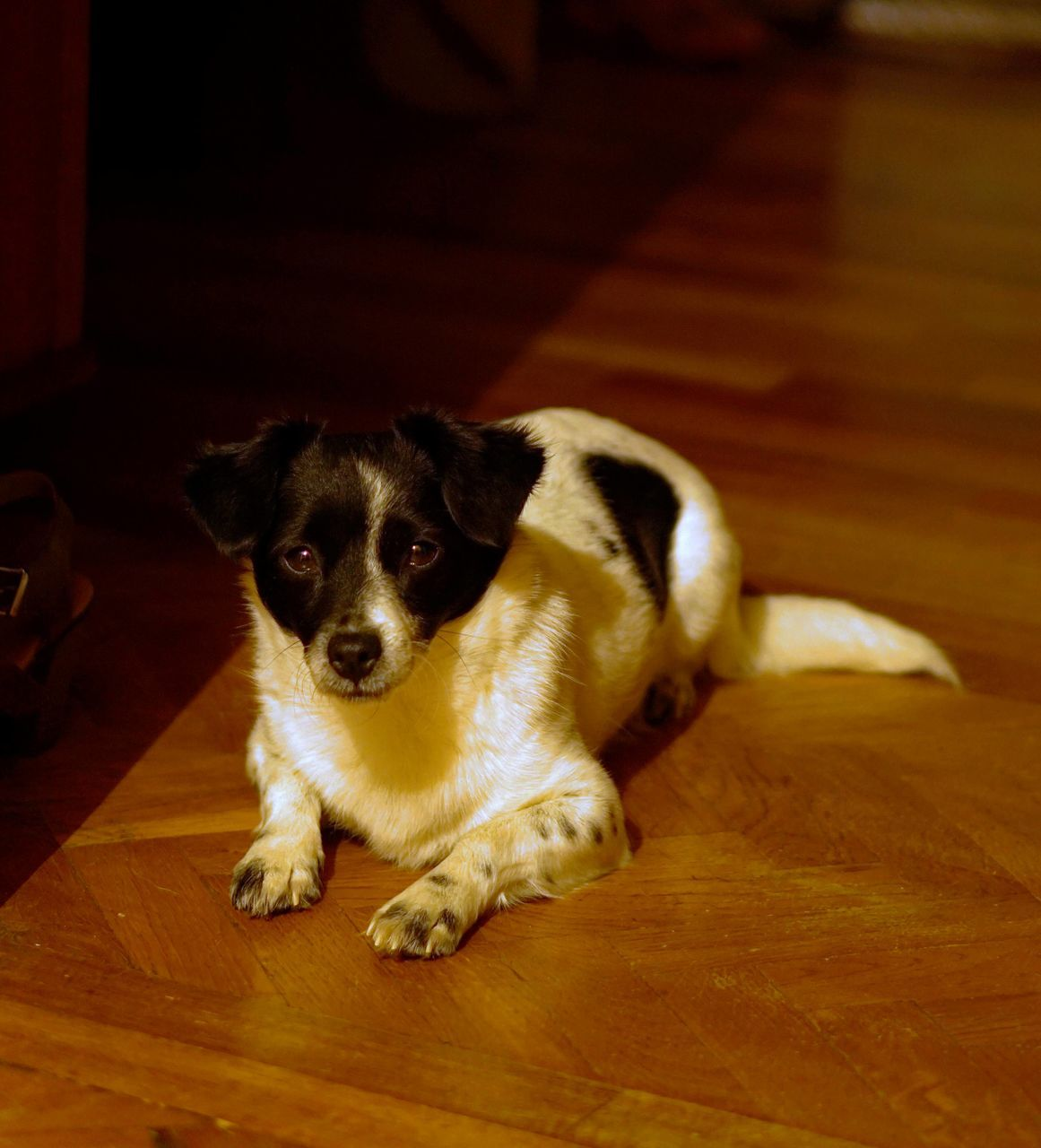 Close-Up Of Dog On Wooden Floor