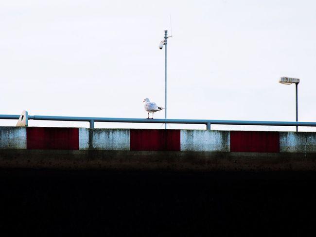 Seagull alert Seagull Alert Lock Ship Lock Sluice Bird Lookout Sky Red White Antenna Nikon Streetlight Riverlight
