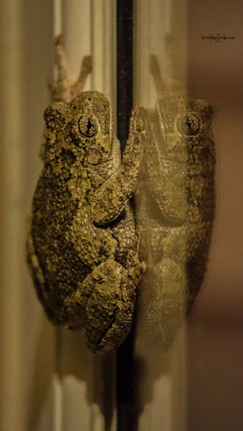 Art Is Everywhere Close-up Textured  Animal Themes Nature Nature Collection Nature_ Collection  Nature_collection Eye4photography  Night Highwater Spring Indiana Reflection_collection Reflection Reflections Amphibian Frog Frogs Animal Wildlife