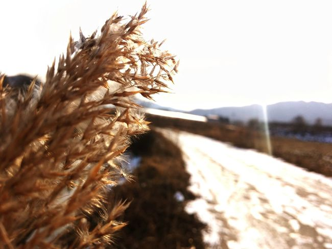 Nature Sky Footpath Walkway Nature_collection EyeEm Best Shots EyeEm Best Edits EyeEmBestPics Photography Plant Life