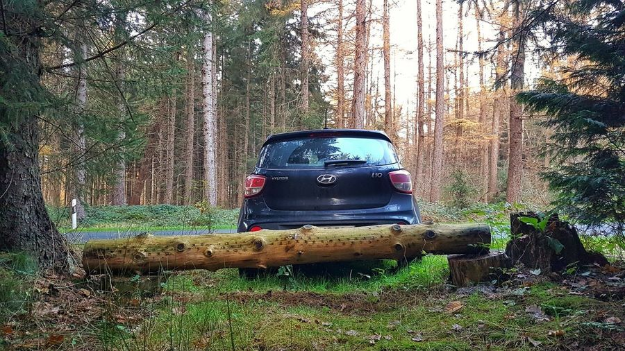 View of abandoned car on forest