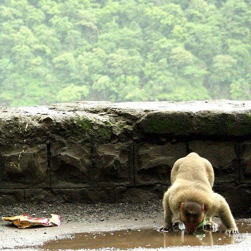 Watering hole. Clicked at Varanda Ghat. Monsoon Momentsofmadness Monsoonmagic Mountainranges maharashtra monkey incredibleindiaofficial incredibleindia india wanderlust travelbug travel