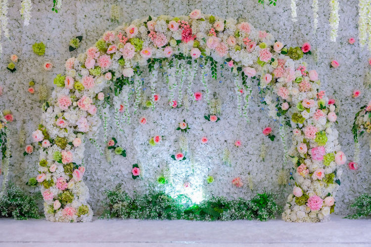 Multi colored flowering plants on wall