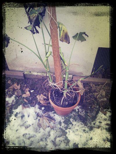 Goodbye my old fried. Tod durch Erfrieren am Fenster. Indoor!
