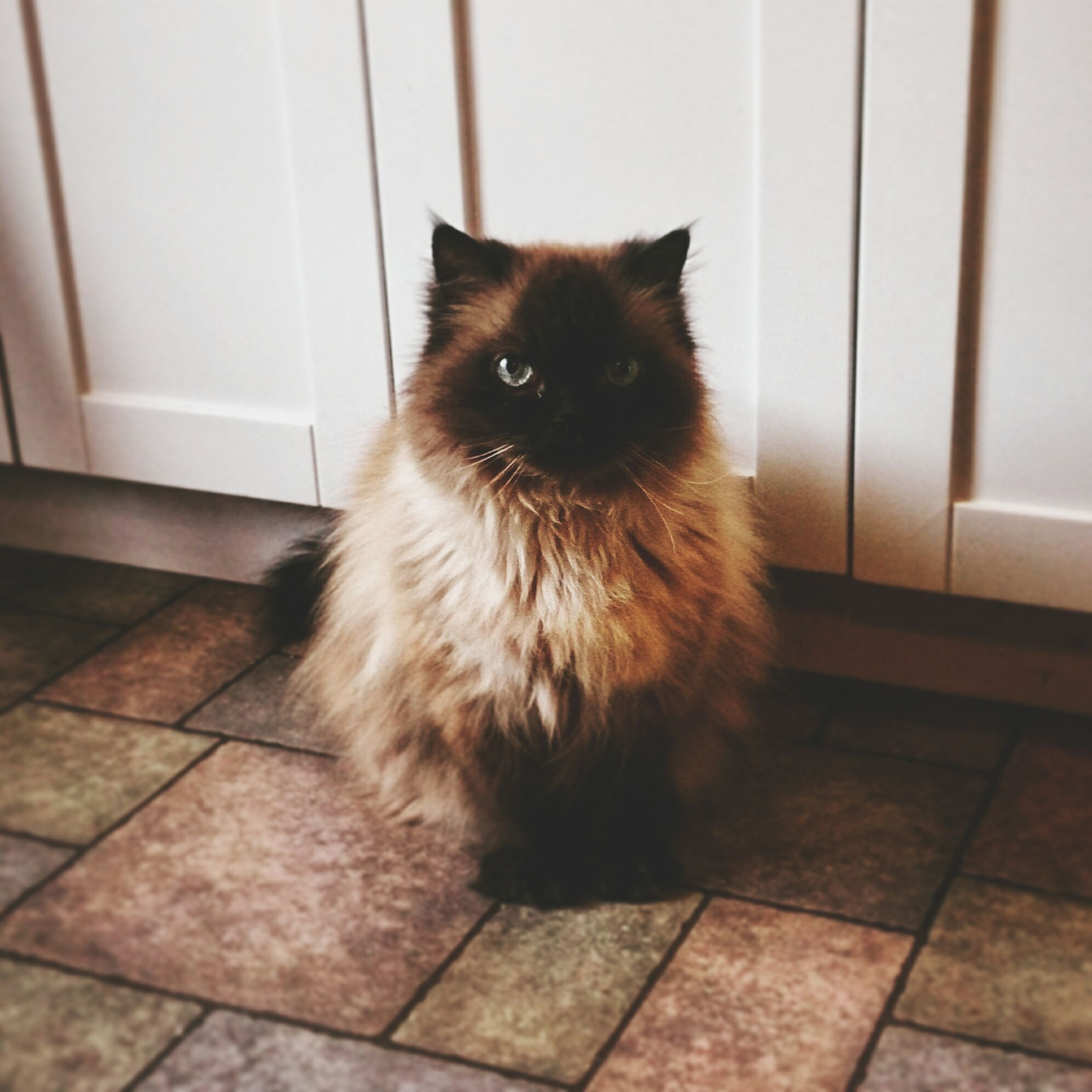 indoors, one animal, animal themes, pets, domestic cat, domestic animals, cat, mammal, sitting, feline, whisker, flooring, portrait, looking at camera, home interior, relaxation, tiled floor, full length, no people