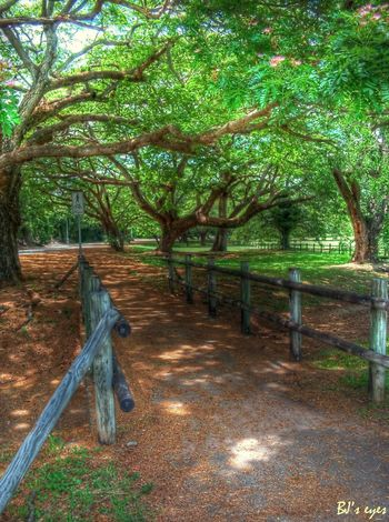 """Bridge"" Tree Plant Growth Nature No People Day Land"