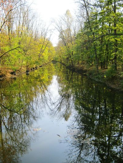 Reflection Water Tree Nature Lake No People Outdoors Sky Growth Beauty In Nature Reflection Lake Day Scenics Backgrounds Green Color Nature Photography Trees And Water Photography In Love With Nature Bushes And Trees Small River In Forest River Banks Water Canal Handmade Canal Blue Sky Ukraine 💙💛