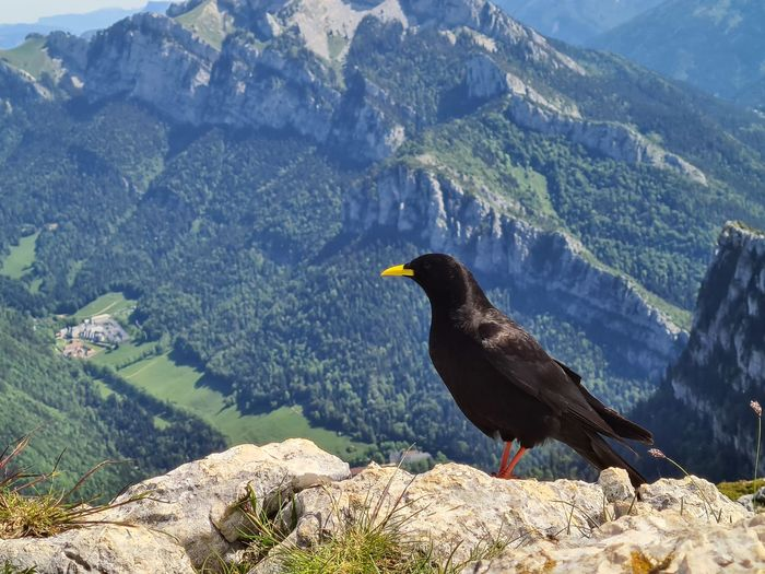 View of bird perching on rock