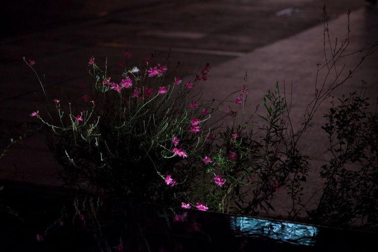 夜の華 Flower