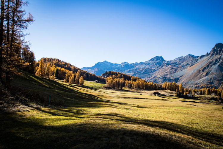 view over a beautiful scenery in the alps in autumn Autumn Autumn Colors Houses Alps Beauty In Nature Blue Sky Clear Sky Day Engadine Switzerland Evening Fex Valley Field Grass Landscape Mountain Mountain Range Nature No People Outdoors Scenics Sky Switzerland Tranquil Scene Tranquility Tree