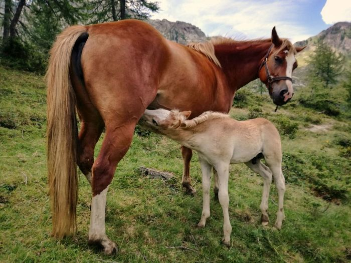 Horse Domestic Animals Two Animals Animal Themes Mammal Togetherness Day Grazing Outdoors No People Grass Sky Nature Rural Scene Orobian Alps Nature Italy Close-up Animals In The Wild Valbrembana